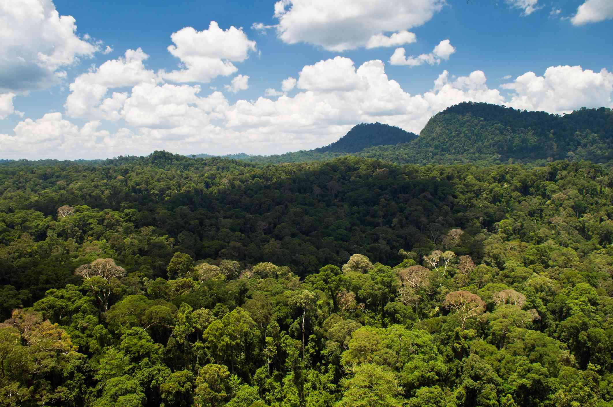 aerial view of forest in Danum Valley, Borneo.