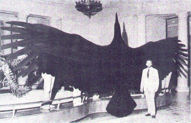 Argentavis with wings spread wide