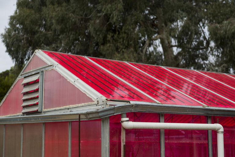 Special red solar panels on the roof of a greenhouse
