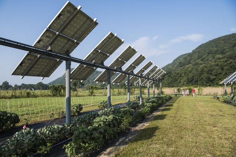 Los paneles solares combinan sorprendentemente bien con tomates, pimientos y polinizadores
