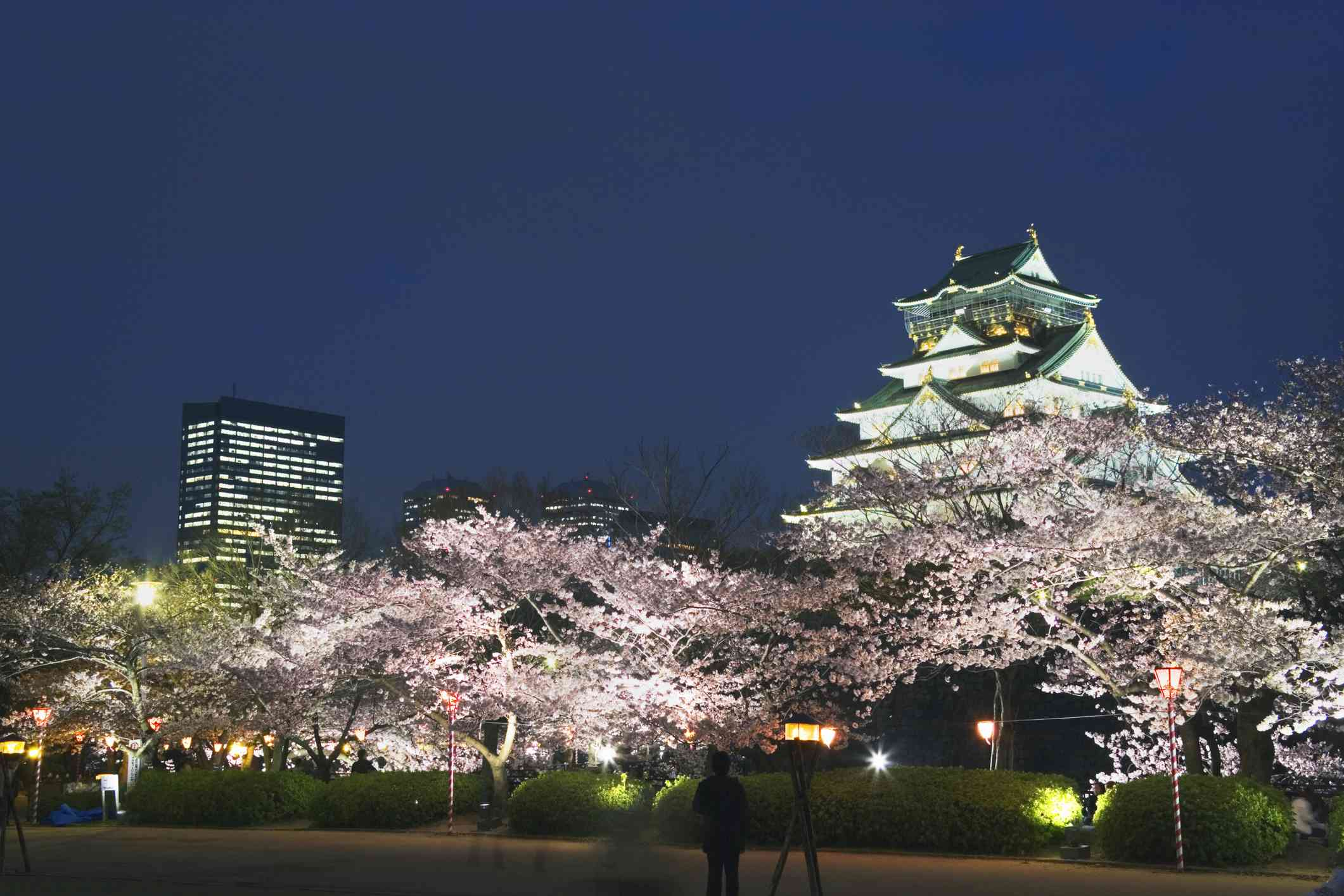 Pink cherry blossom trees in bloom around the Osaka Castle at night under a clear sky
