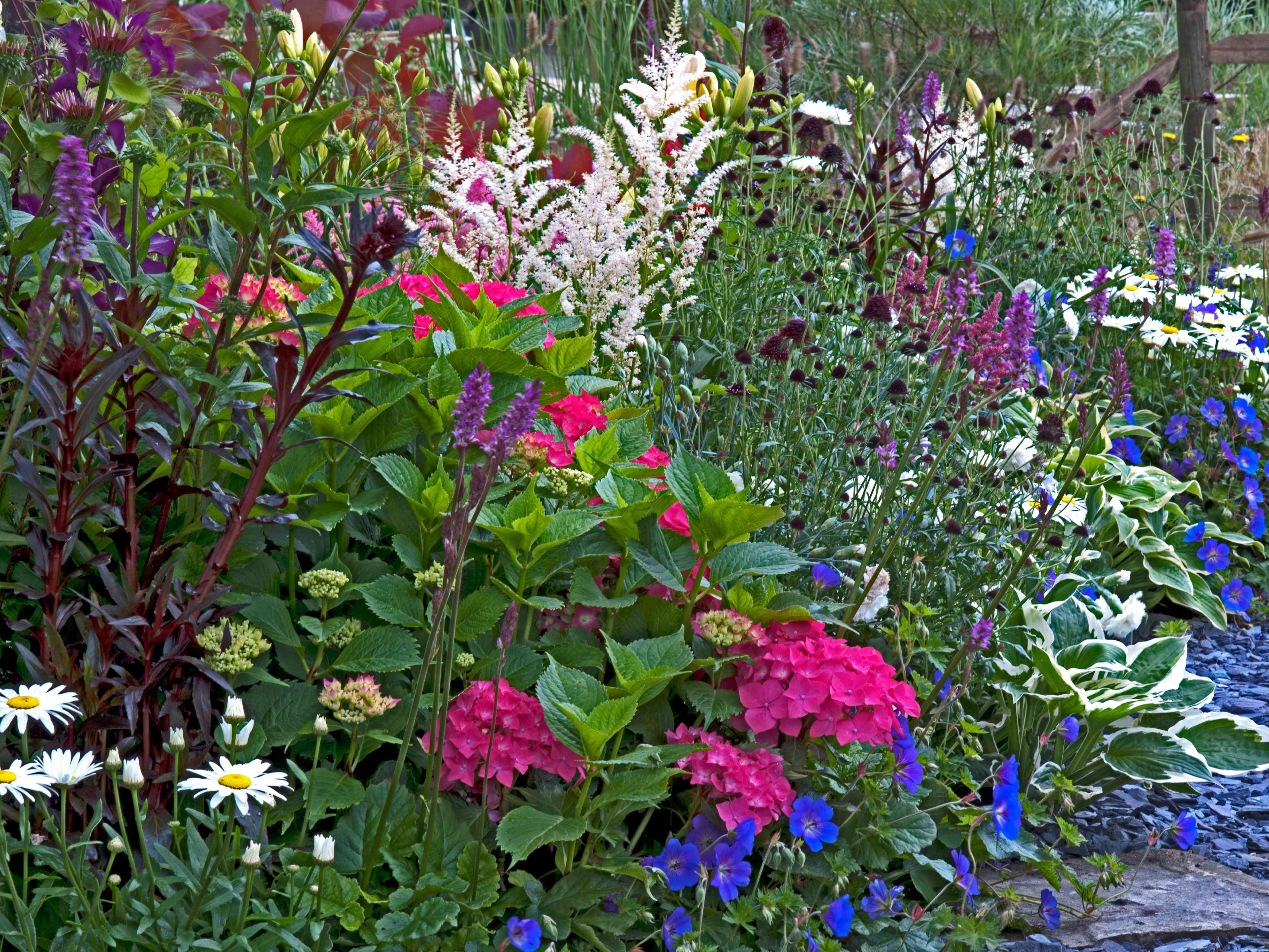 a field of flowers and plants growing in a garden