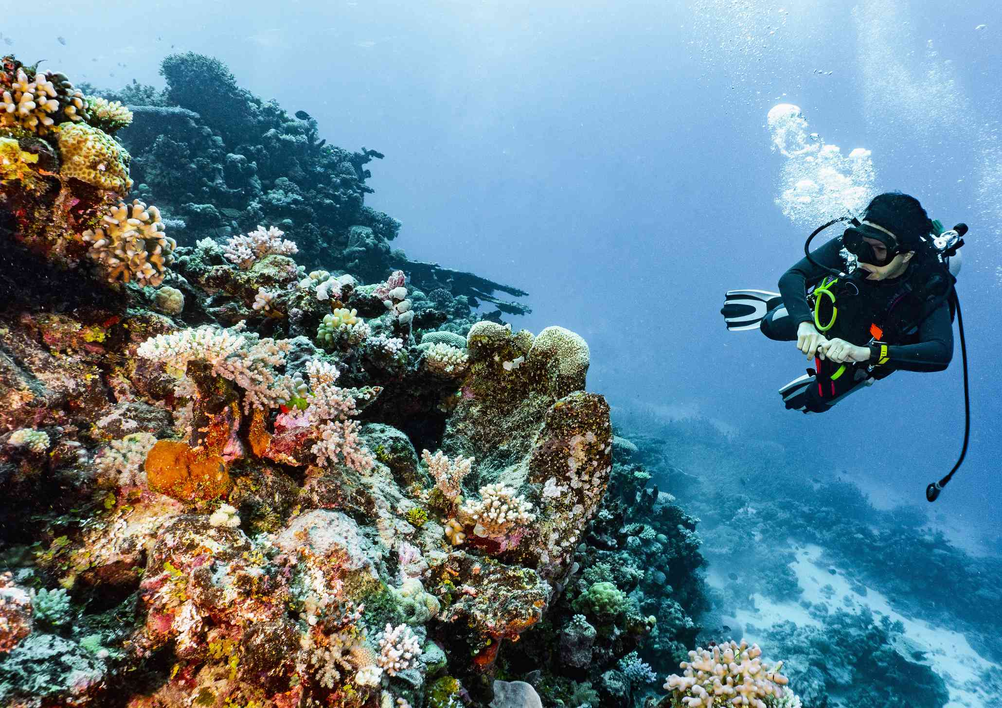 scuba diver exploring a variety of colorful coral on the Great Barrier Reef