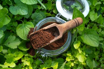 glass jar of coffee grounds with wooden scooper sits in pile of green vines