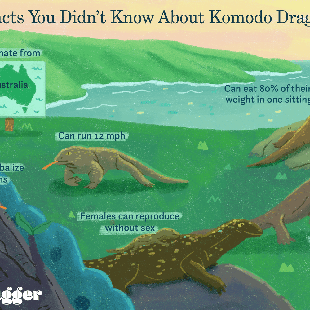 I wonder if dragons are real - and other neat facts about reptiles & amphibians