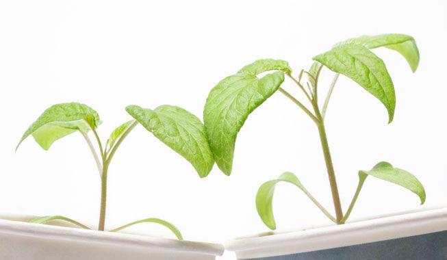 'Chismes' de las plantas sobre lo que sucede en la superficie