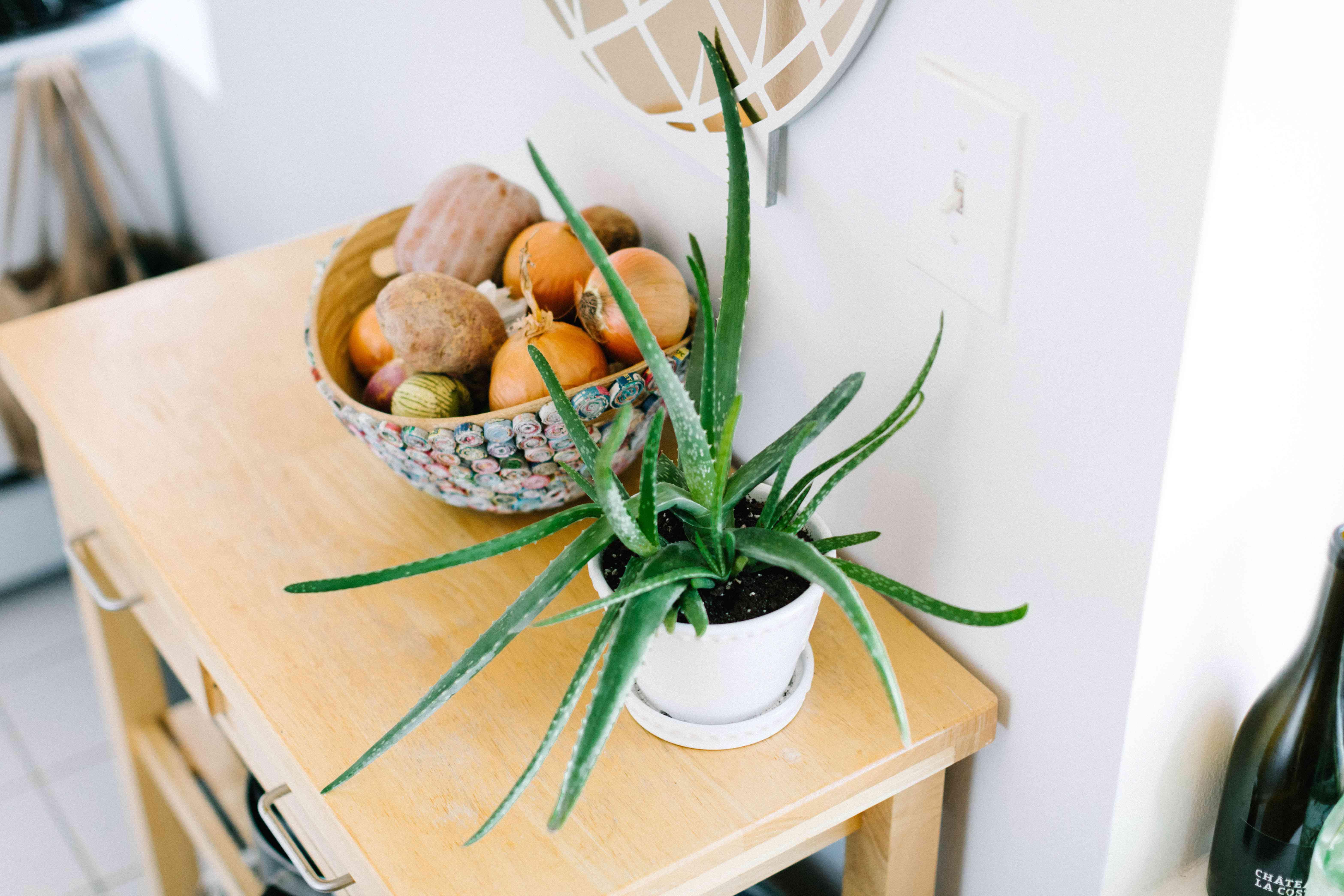 aloe vera plant in kitchen on butcher block
