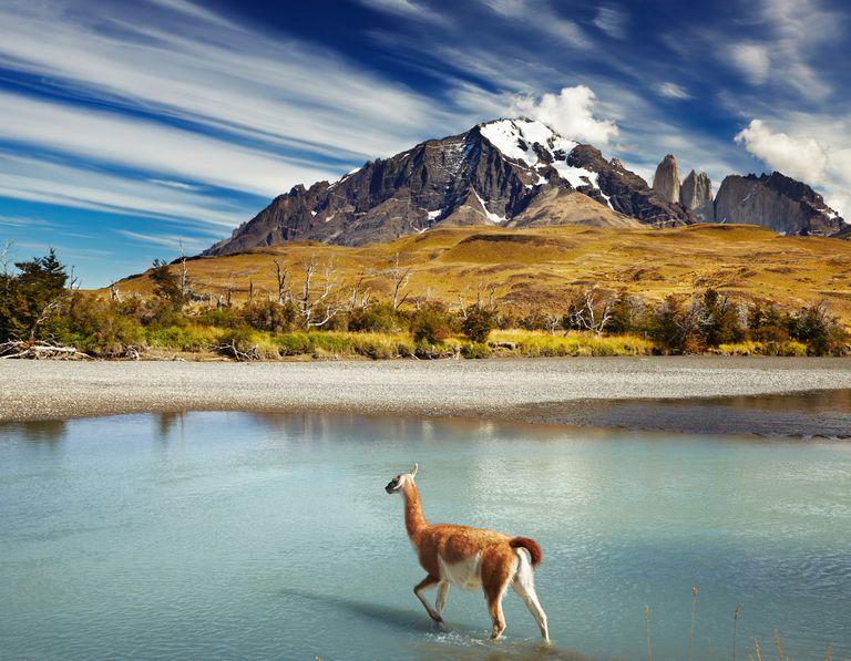 Patagonia donó $ 10 millones de 'reducción de impuestos irresponsable' a causas ecológicas