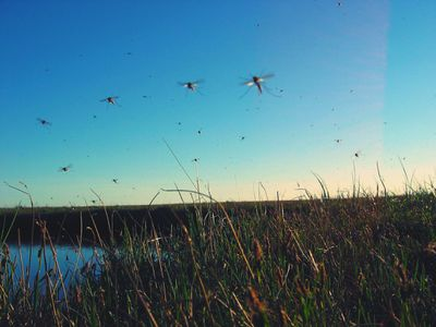 Mosquitoes Flying Over Field Against Clear Sky