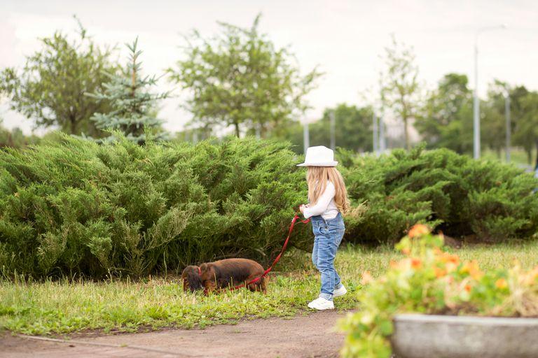 Mamá de Chicago investigada después de dejar que su hija paseara sola al perro