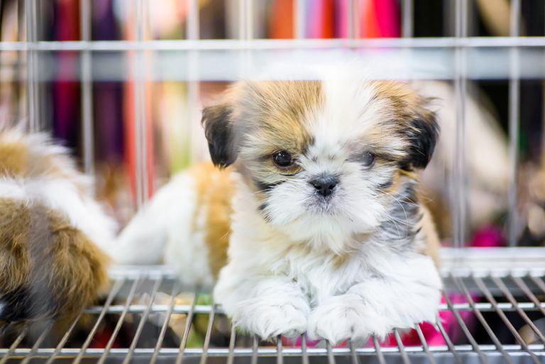 Inglaterra pretende prohibir la venta de cachorros y gatitos en las tiendas de mascotas