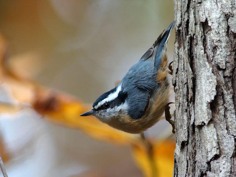 El conteo de aves navideñas despega el 14 de diciembre
