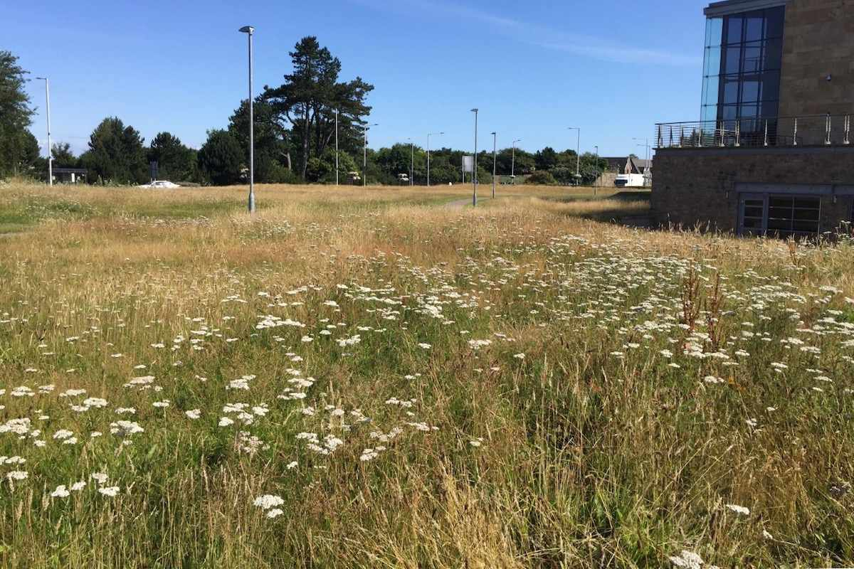 St Andrews Gateway meadow