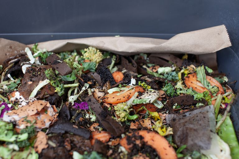 Worms in a feeding tray with fresh food and bedding material in an outdoor vermicomposter.
