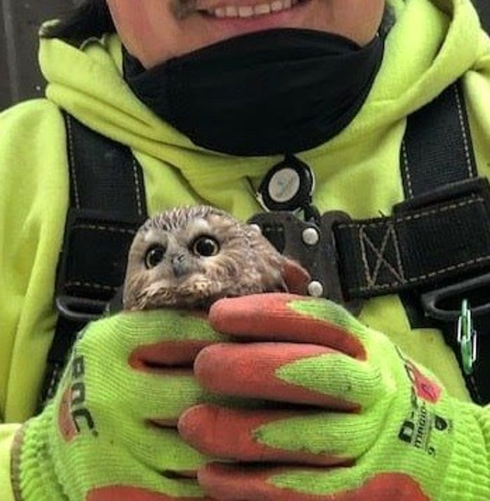 worker holding owl