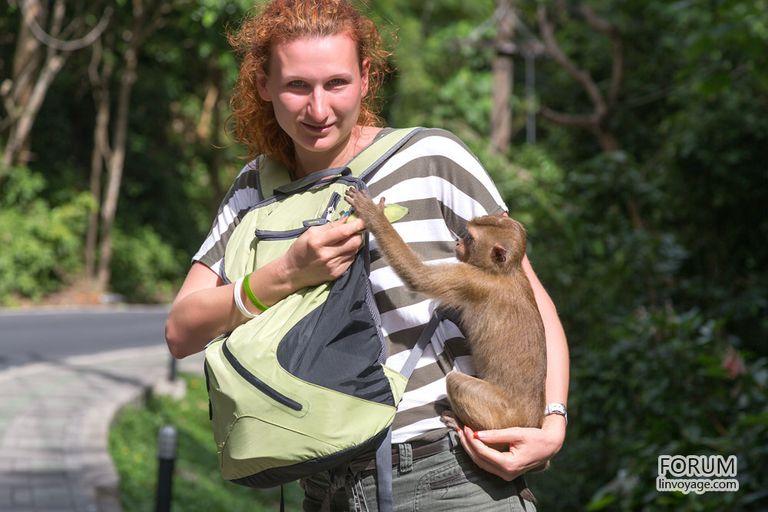 Por qué el ecoturismo es peligroso para la vida silvestre