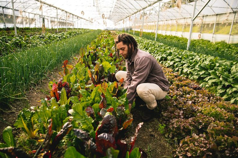 man in a greenhouse farm