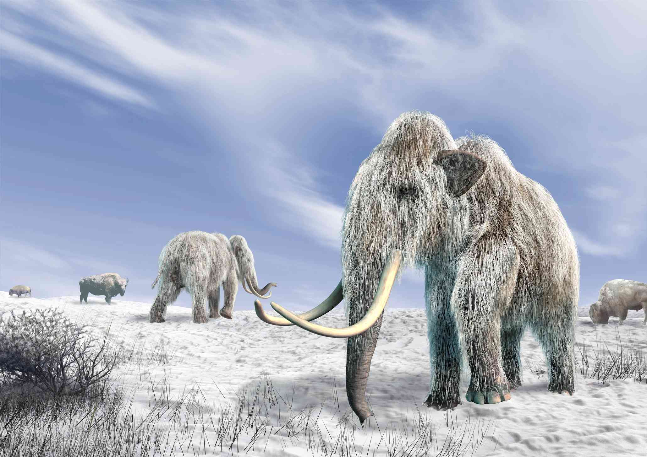artwork of woolly mammoths walking across snow with long tusks and icy fur
