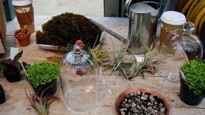 Terrarium materials on a gardening bench