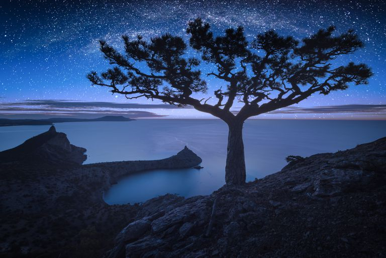 The Milky Way shines above a pine tree overlooking the coast of Crimea.