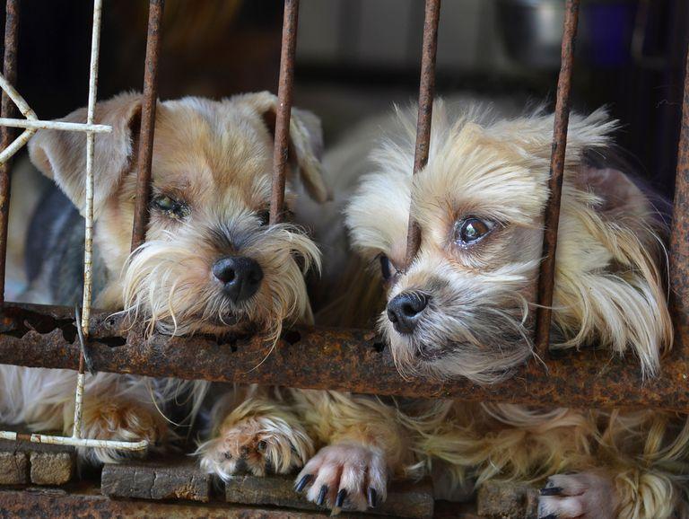 ¿Qué es exactamente un molino de cachorros?