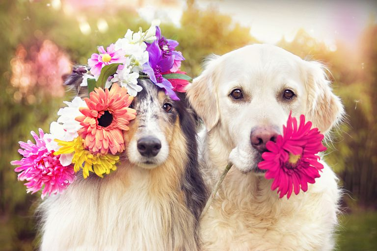 Dogs with flowers