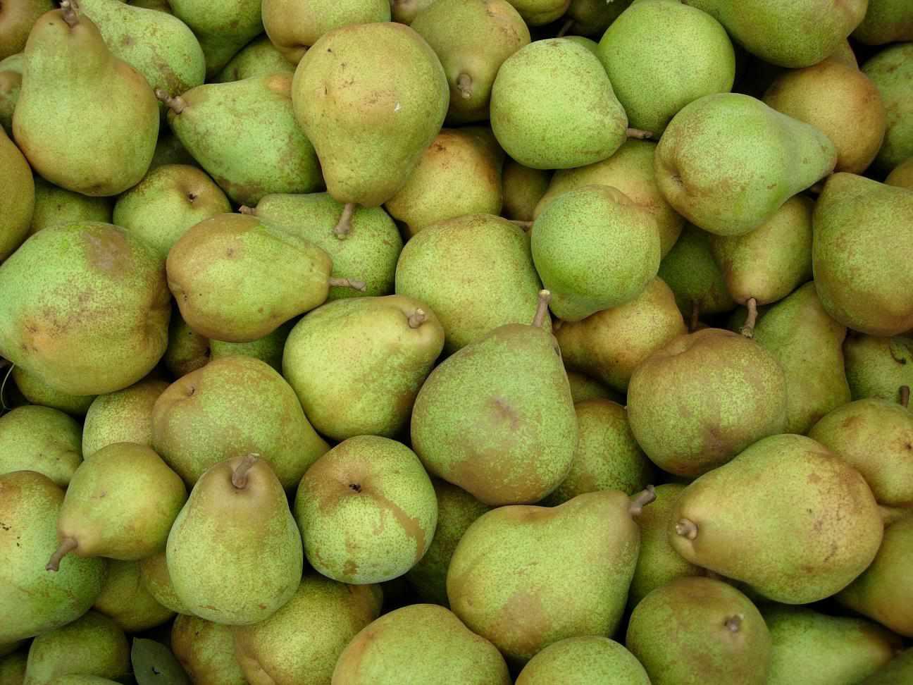 pile of green Comice pears