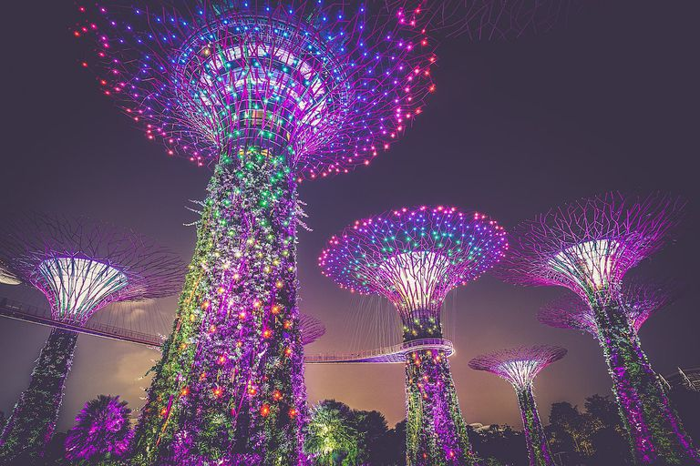 Solar-powered supertrees in Singapore are lit up at night.
