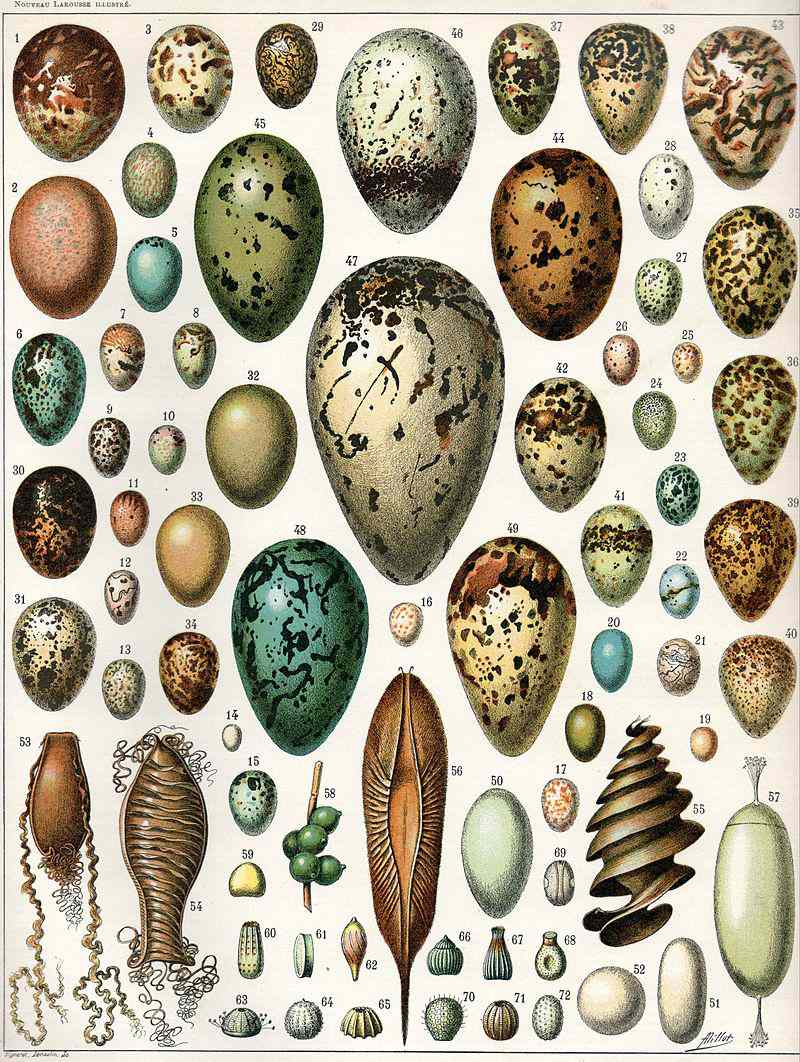 eggs from birds, reptiles and insects