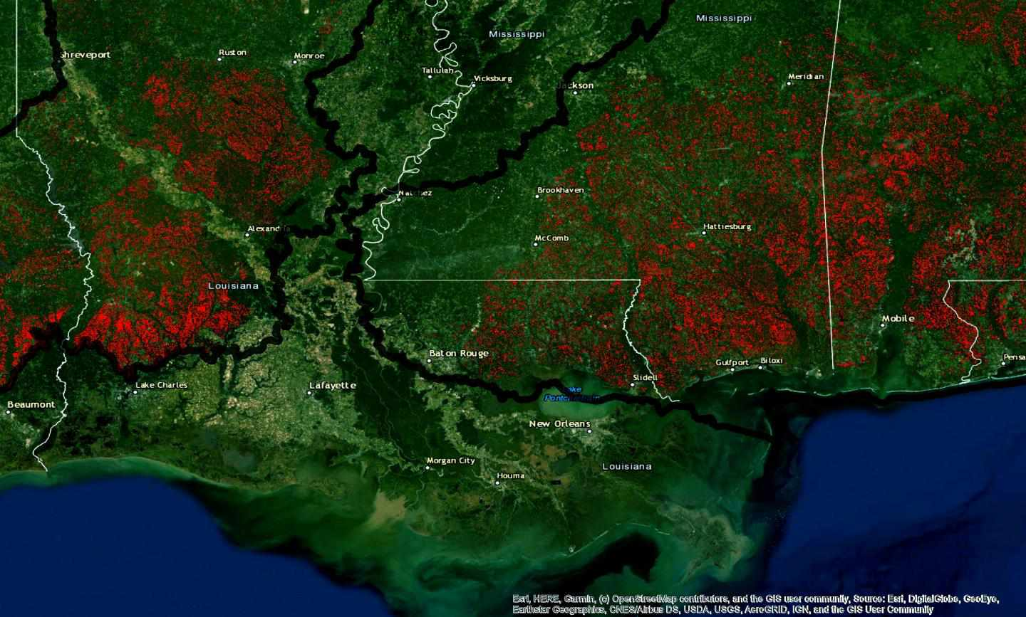 Map showing habitat loss for red-cockaded woodpeecker