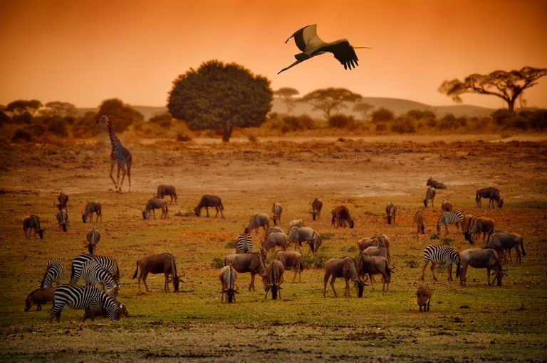 A diversity of large animals in an African grassland.