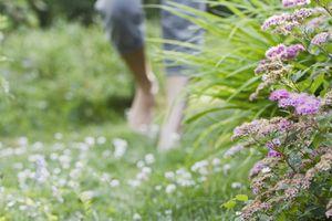Man walking barefoot on grassy clover pathway