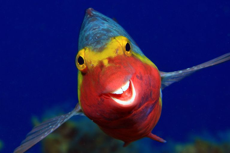 Smiley photo of parrot fish