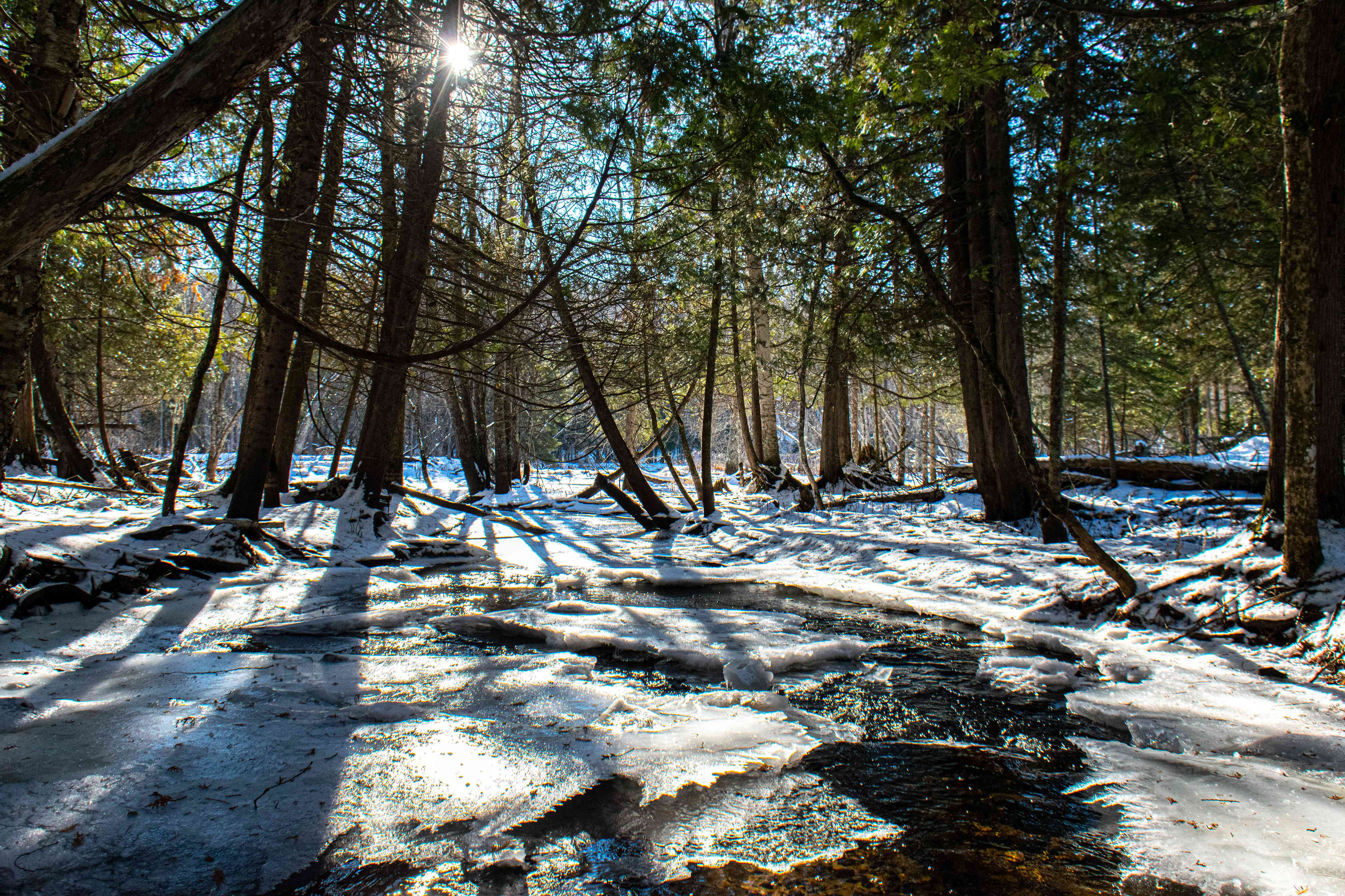 snow melting in sunny forest