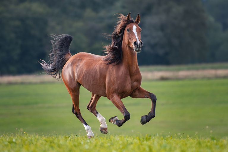 brown horse with black mane runs through field with wind blowing through hair