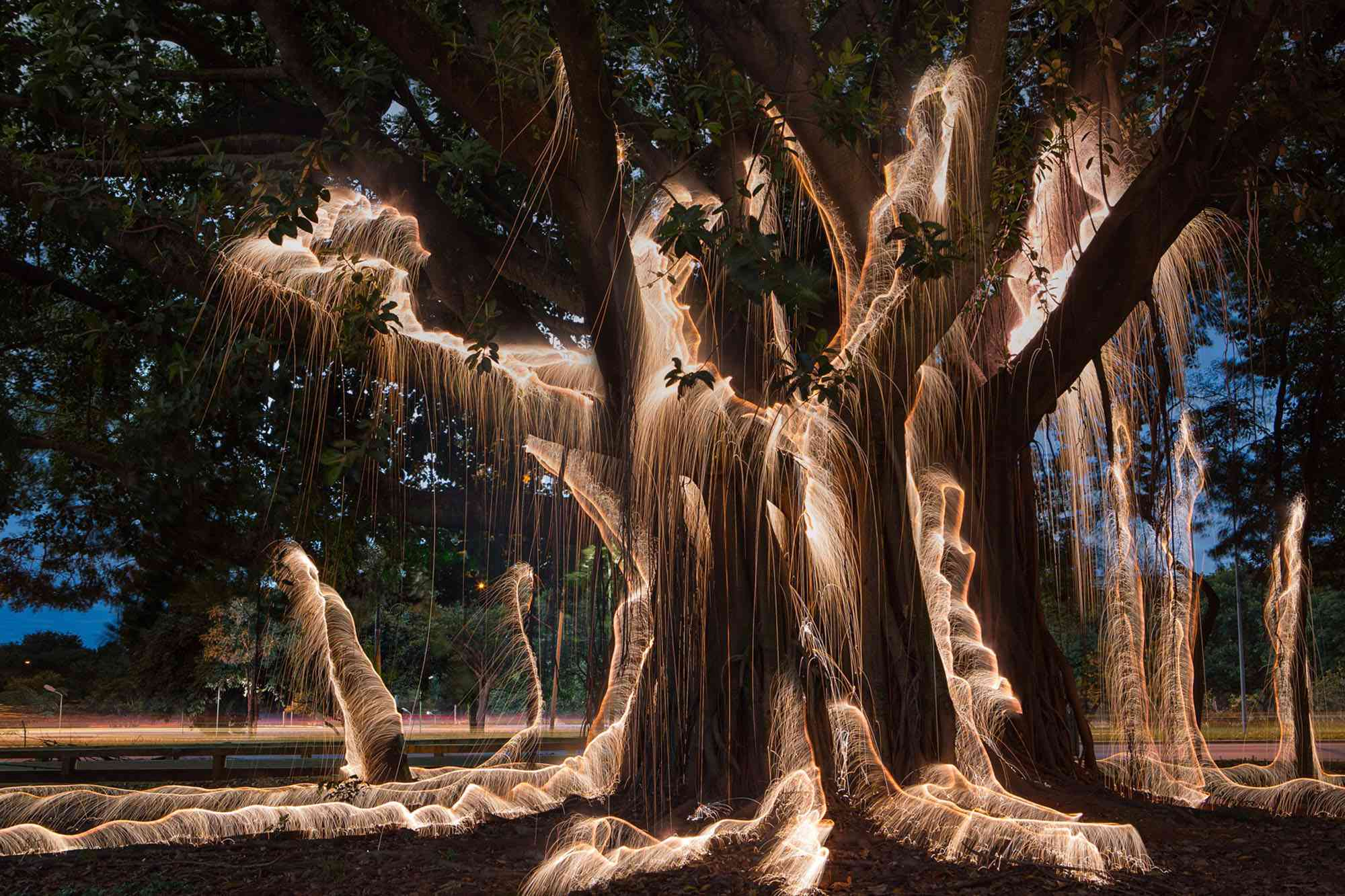 Impermanent Structures light painted trees photographs Vitor Schietti