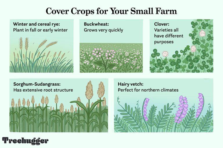cover crops for your small farm illo