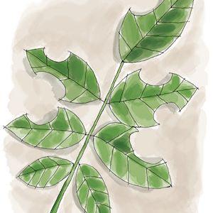 Illustration of chewed leaves