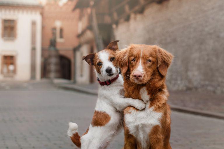 4 consejos para llevar a casa un segundo perro