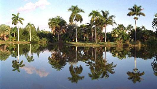 Fairchild Tropical Botanic Garden palms