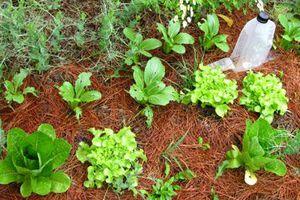 No Dig Harvest photo