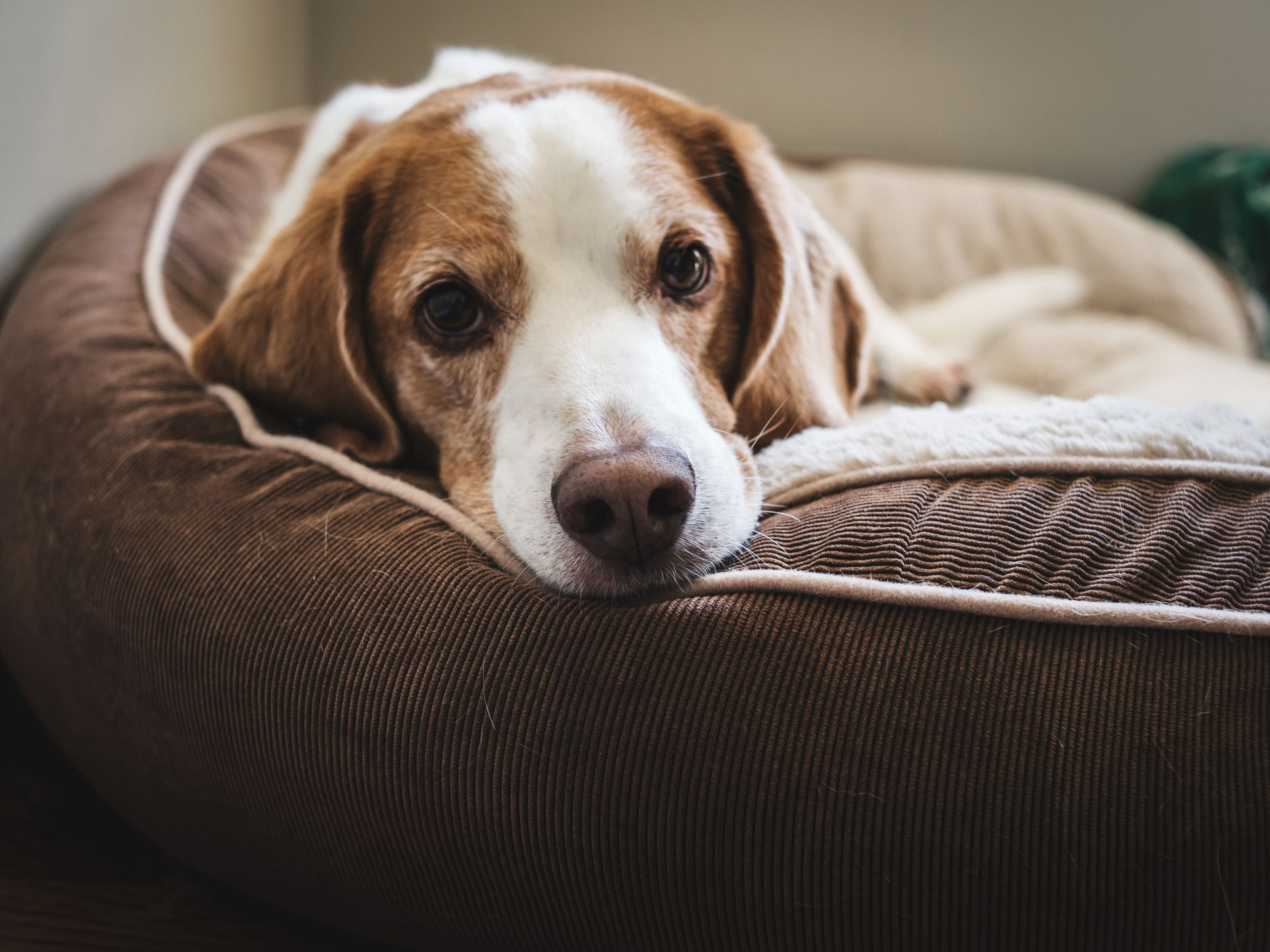 Picture of: 7 Planet Friendly Dog Beds For Comfy Canines
