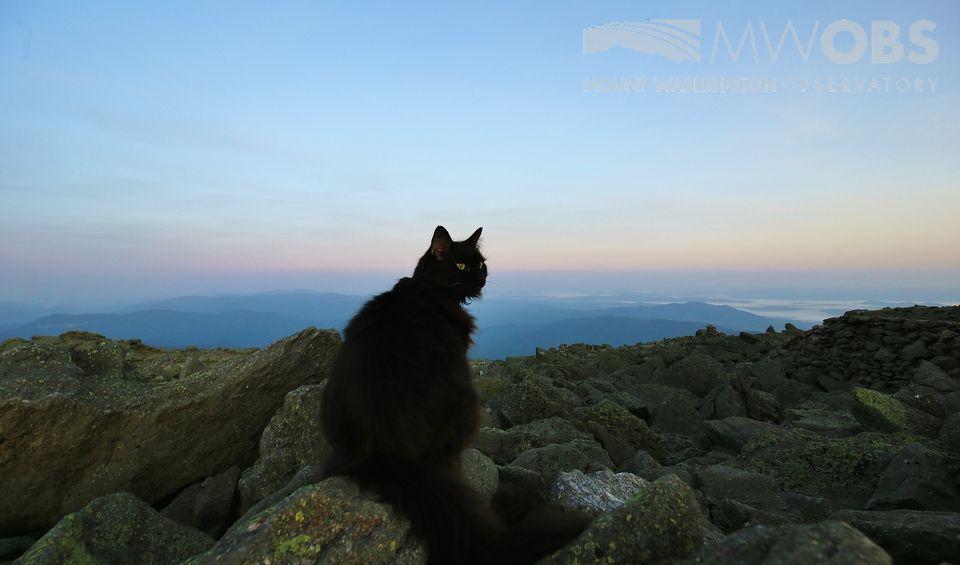 Marty the cat on Mount Washington observatory