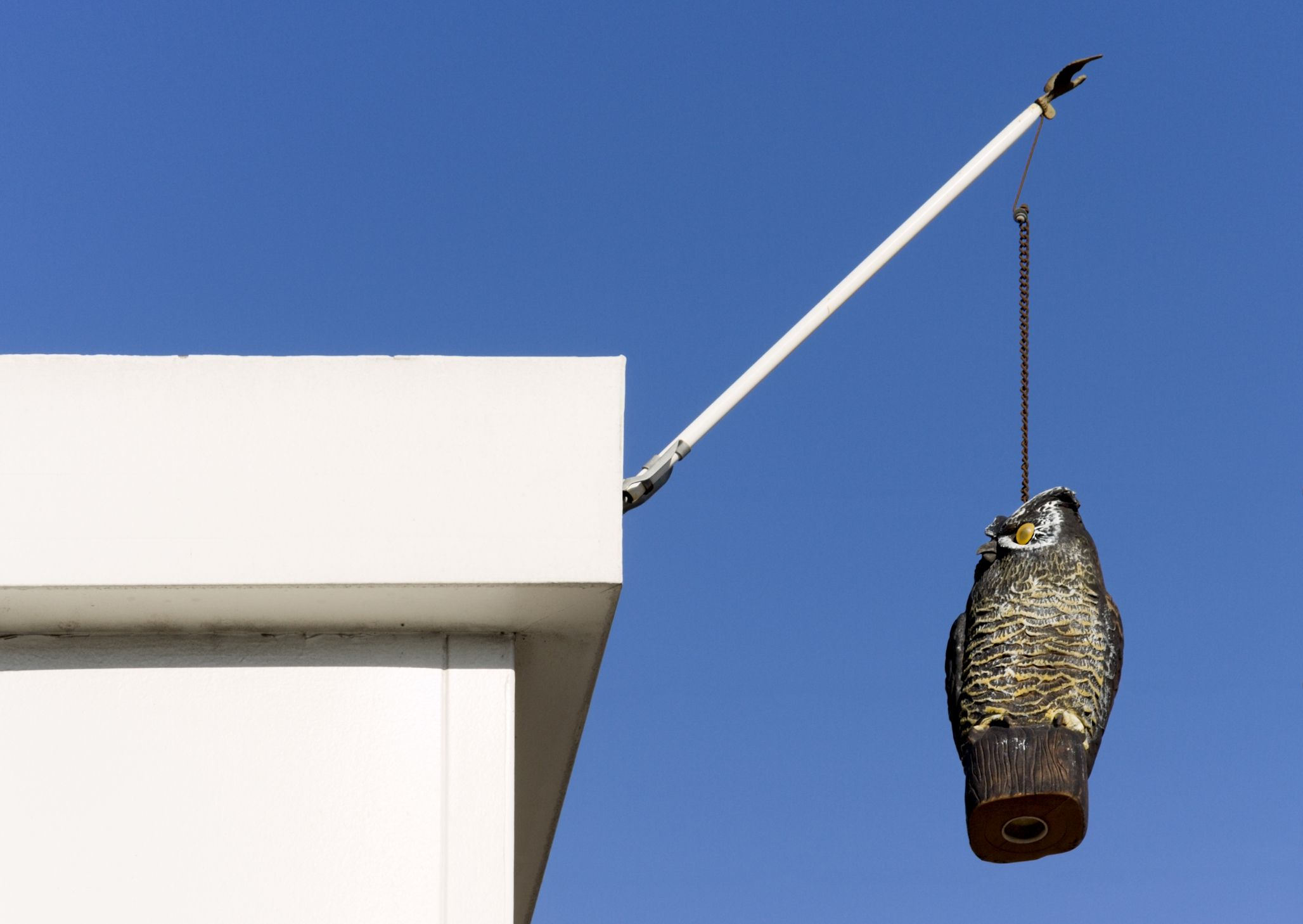Owl decoy hanging from a chain so it moves in the wind