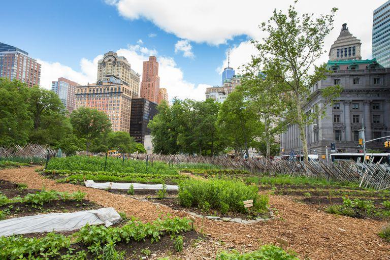 Las granjas urbanas prosperan en medio de la pandemia