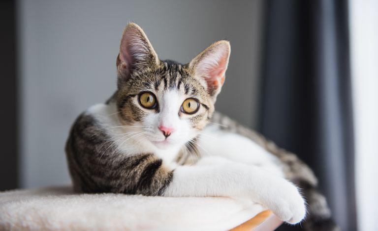 Sí, tu gato realmente te está ignorando