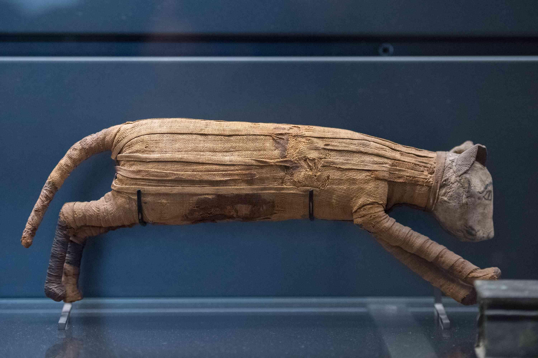 cat mummy in Egypt