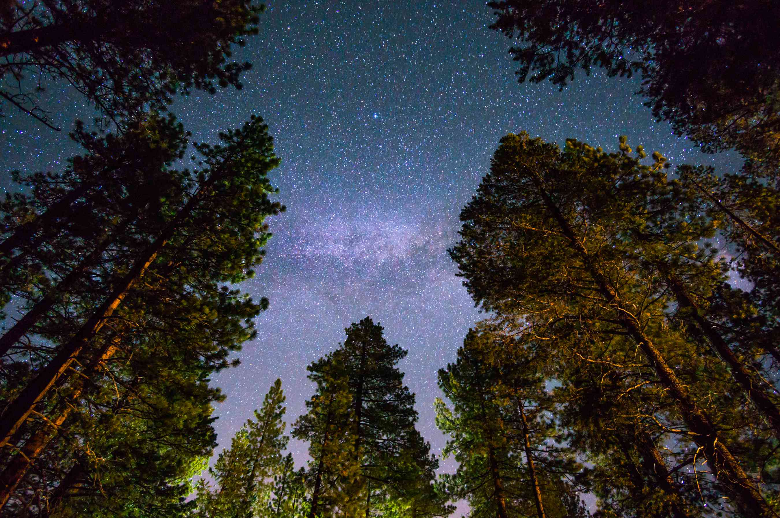 redwood trees at Lake Tahoe under a night sky