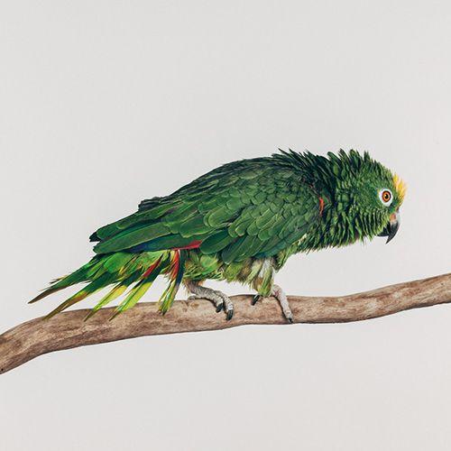 Exotic birds: Einstein