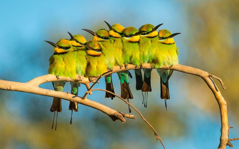 Las aves de Australia se roban el centro de atención en el concurso de fotografía inaugural